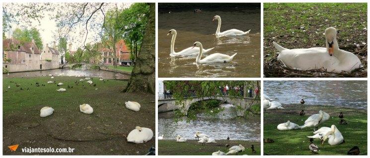 Bruges Cisnes | Viajante Solo