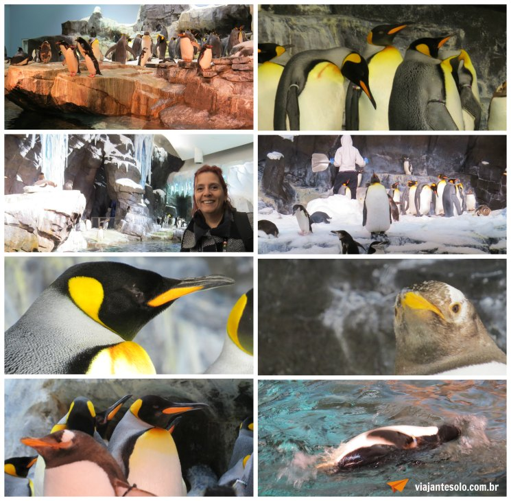 Sea World Antarctica | Viajante Solo