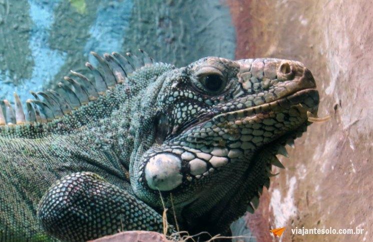 Iguana | Viajante Solo
