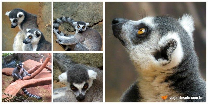 Lemures Colagem | Viajante Solo
