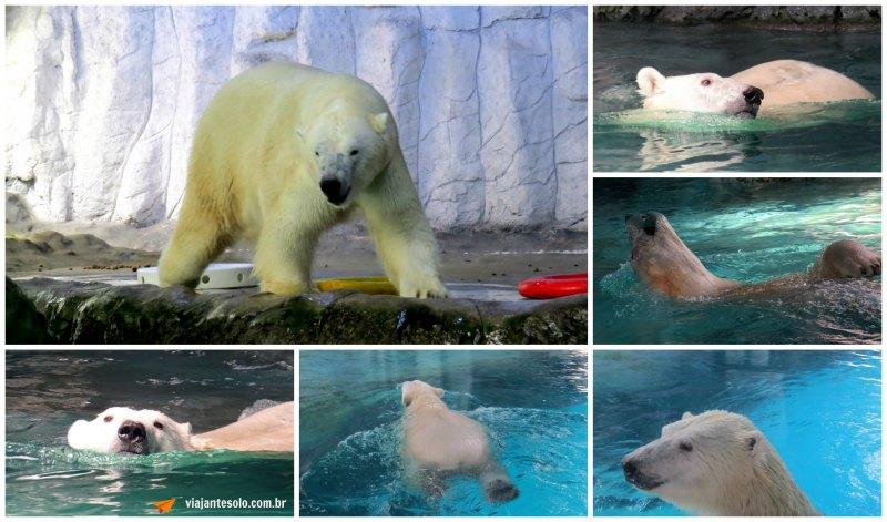 Urso Polar Colagem | Viajante Solo