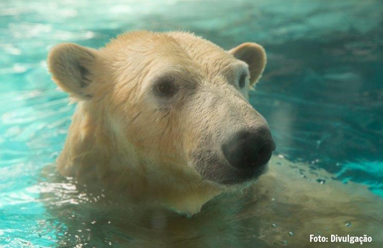 Urso Polar | Viajante Solo