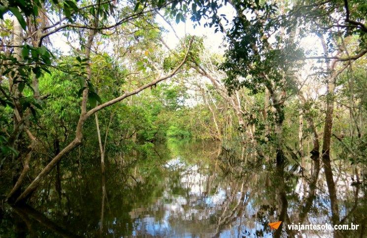 Manaus Passeio Igarapes | Viajante Solo