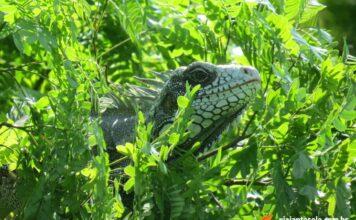 Guia e Roteiro de Manaus