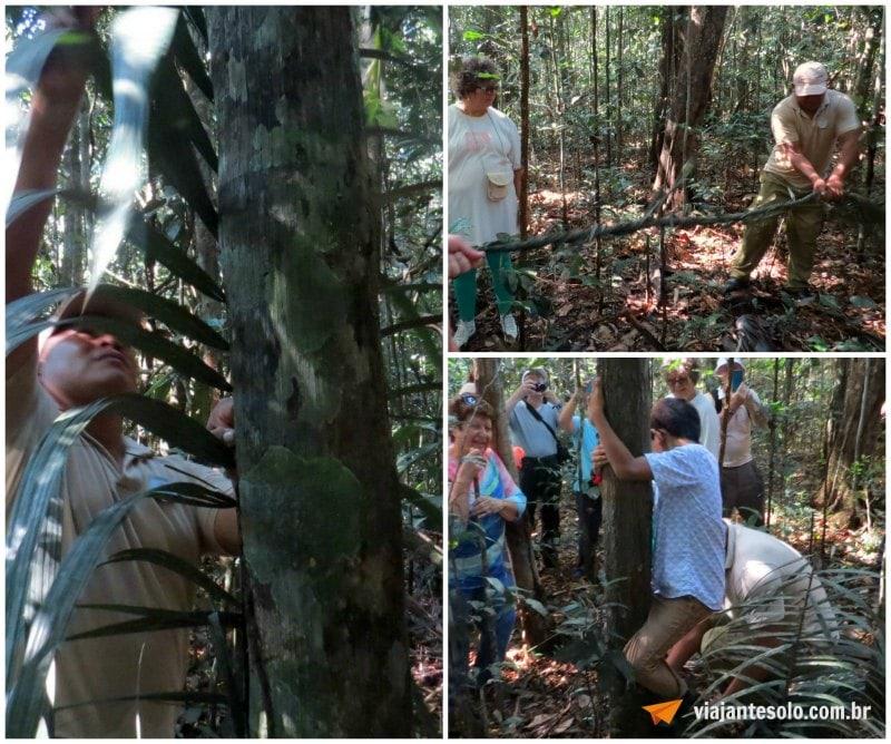 Caminhada na Floresta Amazônica Pecunha | Viajante Solo
