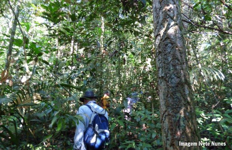 Caminhada na floresta Amazônica Terreno | Viajante Solo