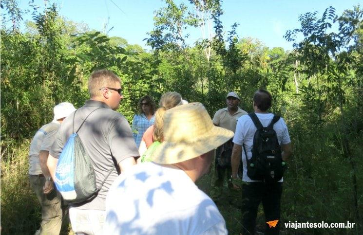 Caminhada na floresta Amazônica Grupo | Viajante Solo