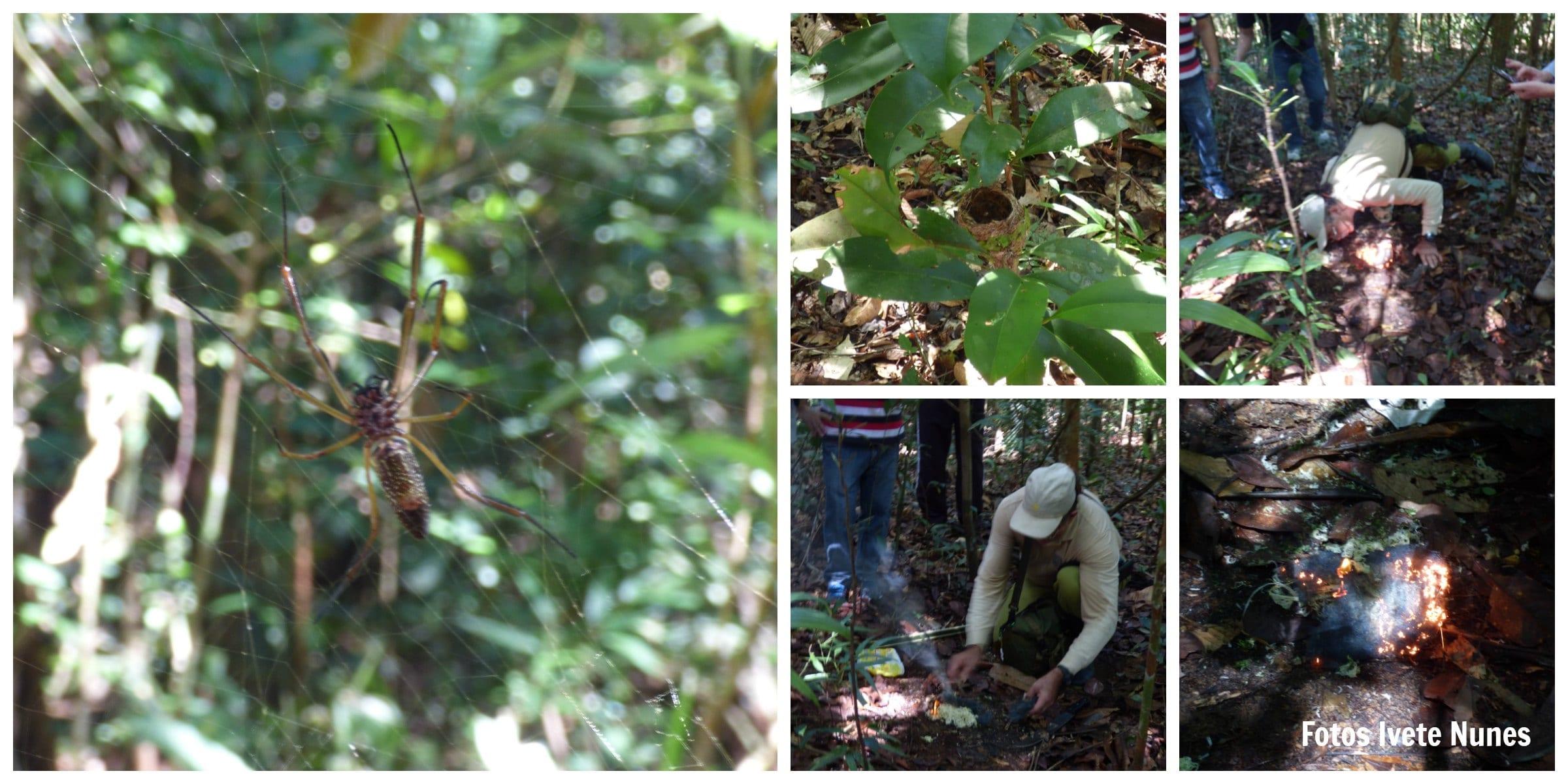 Caminhada na floresta Amazônica Guia Epifânio | Viajante Solo
