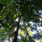 Caminhada na floresta Amazônica Mata   Viajante Solo