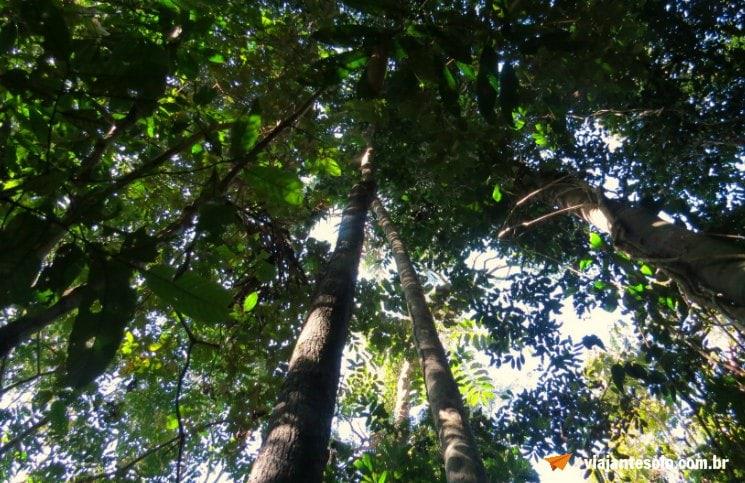 Caminhada na floresta Amazônica Mata | Viajante Solo