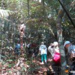 Caminhada na floresta Amazônica Trilha | Viajante Solo