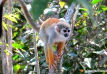 Caminhada na floresta Amazônica   Viajante Solo