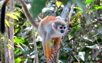 Caminhada na floresta Amazônica | Viajante Solo