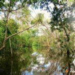 Lago Janauari Igarapés   Viajante Solo