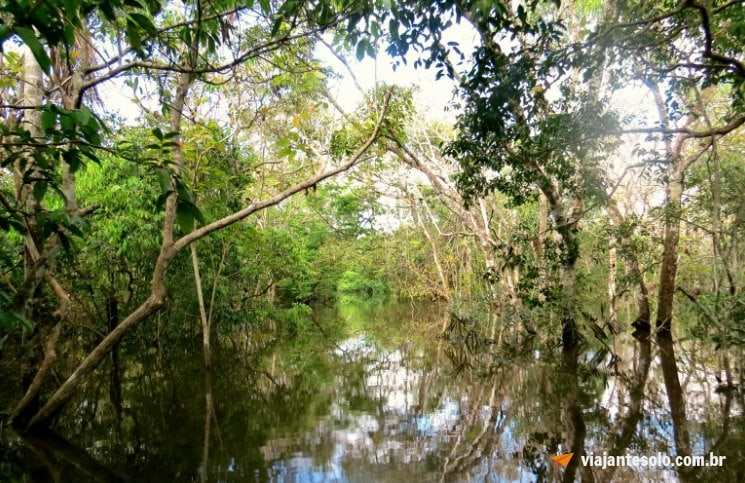 Lago Janauari Igarapés | Viajante Solo