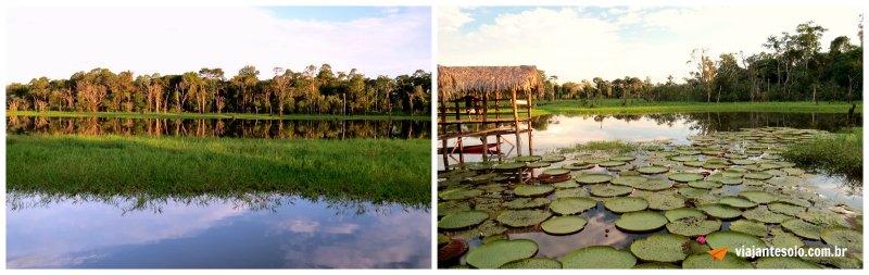 Lago Janauari Paisagem | Viajante Solo