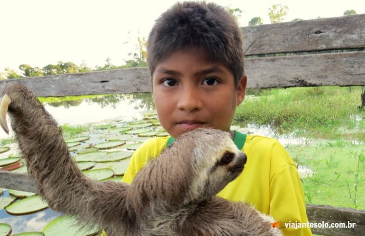 Lago Janauari Preguiça | Viajante Solo