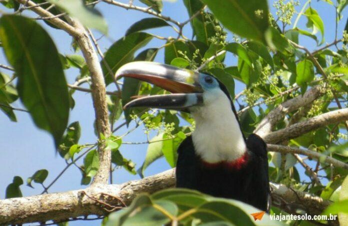 Rio Cuieiras: visita a Comunidade Três Unidos | Viajante Solo