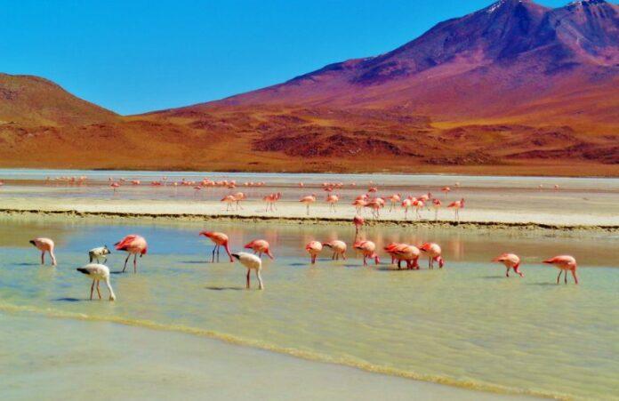 Sozinha na Bolívia1