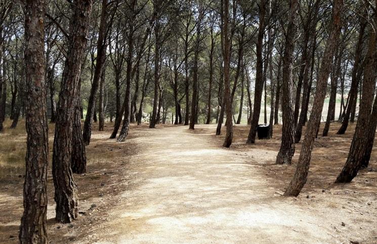 Caminho de Santiago 1
