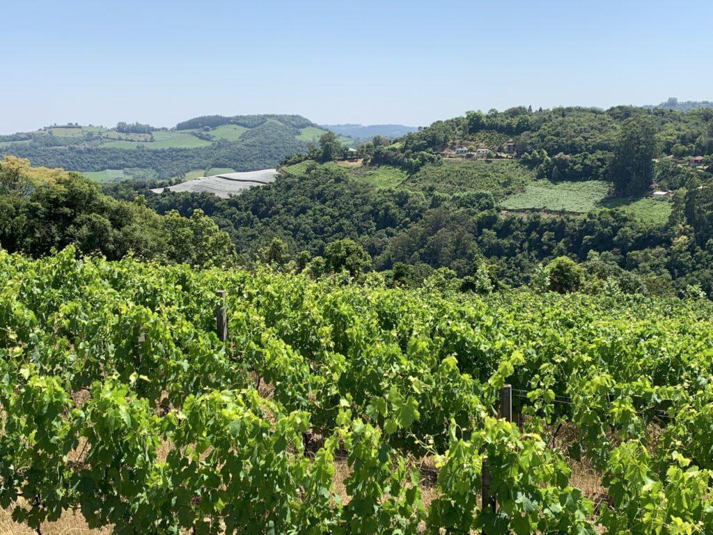 Cristofoli Vinhos Vista do Vale