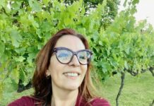 Vinhos Larentis: visita e degustação premium