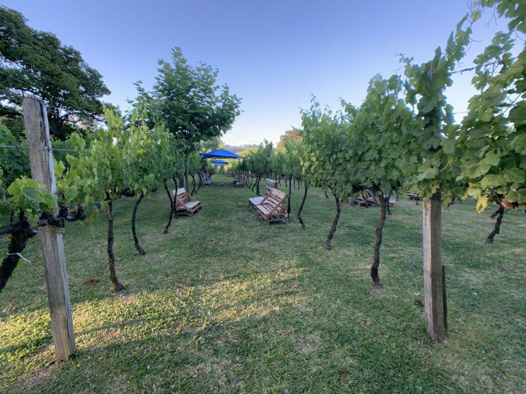 Piquenique Vinhos Larentis