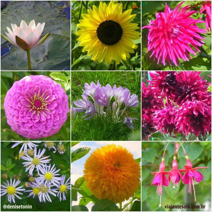 Flores Jardim de Monet | Viajante Solo
