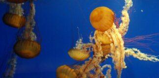 Georgia Aquarium o maior aquário do mundo! | Viajante Solo