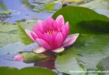 JComo chegar nos Jardins de Monet saindo de Paris | Viajante Solo