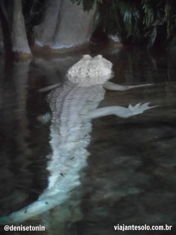 Georgia Aquarium Jacaré Albino